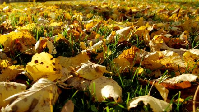 Bидео Autumn leaves on autumn grass