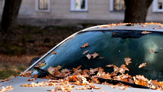 Autumn leaves on the car. video