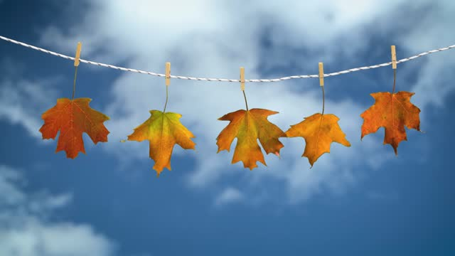 5 Autumn Leaves Out To Dry video