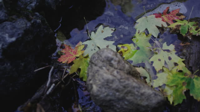 Autumn leaves sitting in mountain stream