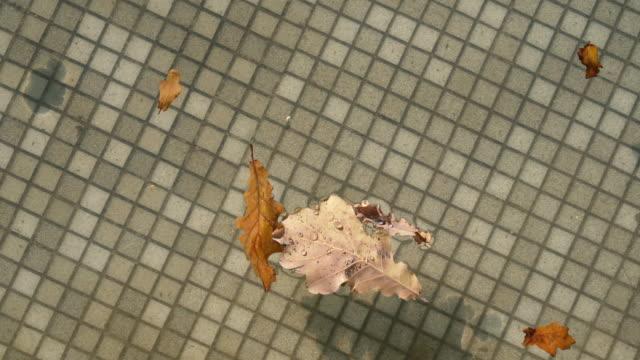 Autumn leaves swim in the pool