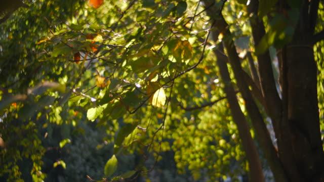 vídeos de stock, filmes e b-roll de folhas de outono, árvores e parque durante o meio-dia, anamorfose (1.25x) slowmotion - setembro amarelo
