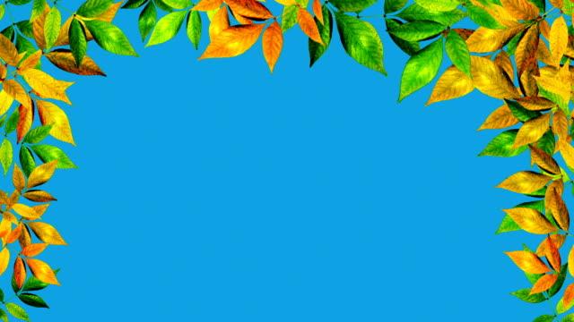 foglie d'autunno - zucca legenaria video stock e b–roll