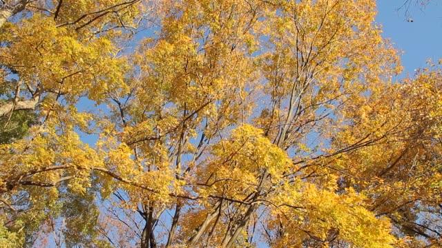 Autumn Leaves video