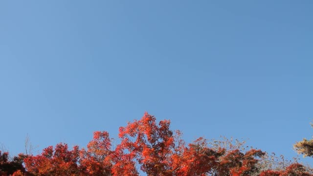 autumn leaves - tilt down stock videos & royalty-free footage
