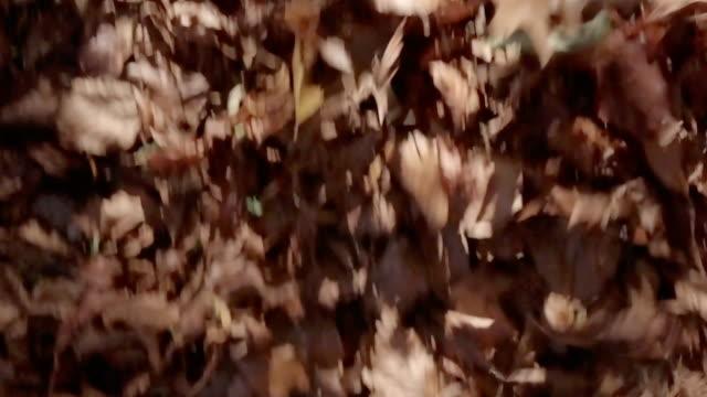 Autumn Leaves Wind - video