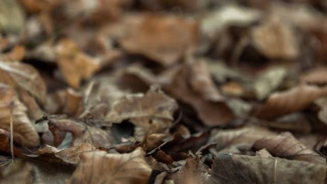 herbst makro nahaufnahme verlässt szene pan intro - laub winter stock-videos und b-roll-filmmaterial