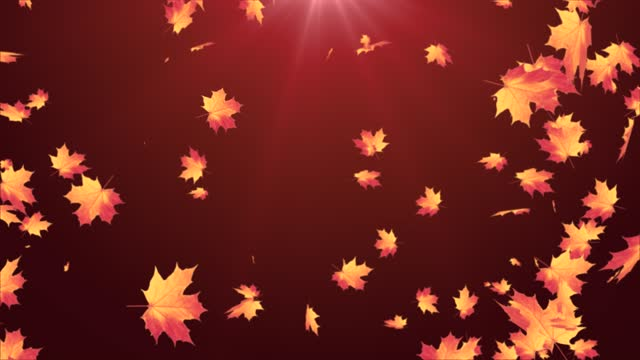 Autumn maple Leaf leaves falling on Alpha channel loop Animation. Autumn maple Leaf leaves falling on Alpha channel loop Animation. Romantic, season, september, spinning, thanksgiving, winter, autumn, nature, green, wedding, valentines day, Winter. fall background stock videos & royalty-free footage