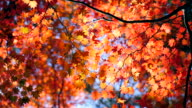 istock Autumn maple leaves with blue sky 1186948549