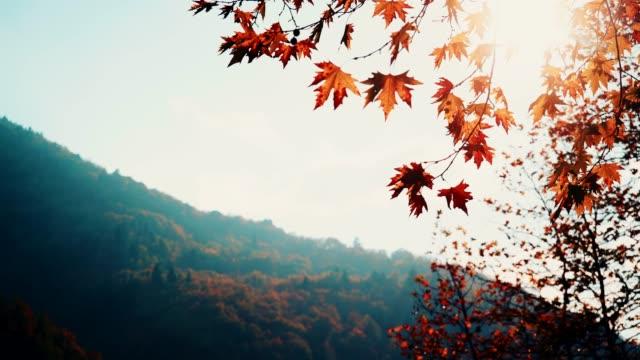 herbst ahornbaum blätter gegen hellen himmel - ahorn stock-videos und b-roll-filmmaterial