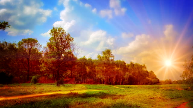 Autumn meadow. video