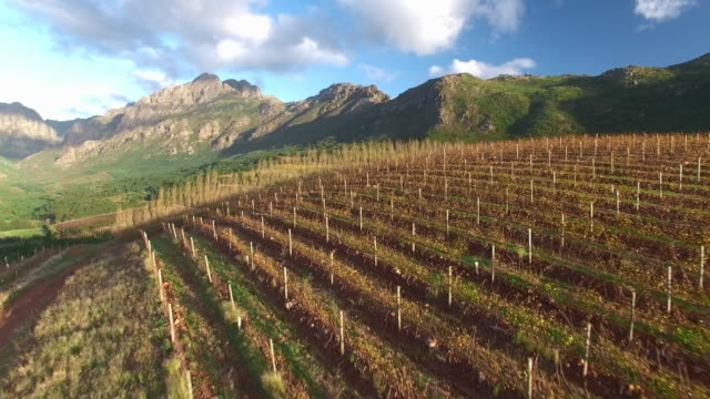 Autumn over the vineyards 4K aerial drone footage of vineyards in autumn in the Western Cape, South Africa cape town stock videos & royalty-free footage