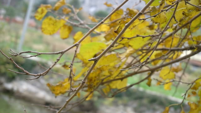 Autumn painted tree closeup video