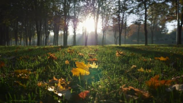 vídeos de stock, filmes e b-roll de parque outono ao nascer do sol. raios brilhantes do sol vindo através de árvores em um parque. grama aparada e algumas folhas amarelas.  uhd - setembro amarelo
