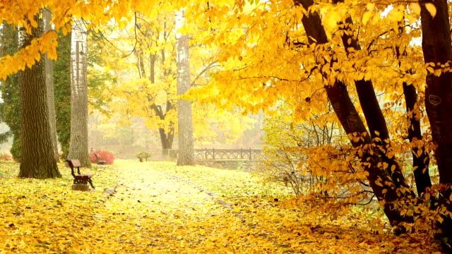 Autumn park fog leaves video