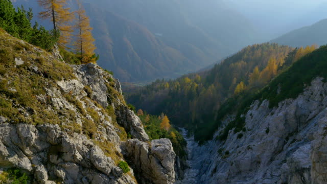 AERIAL: autumn pine trees above the mountain cliff video