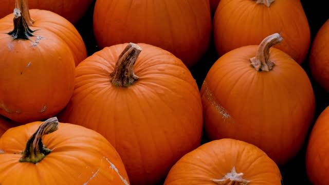 hösten pumpor - halloween background bildbanksvideor och videomaterial från bakom kulisserna
