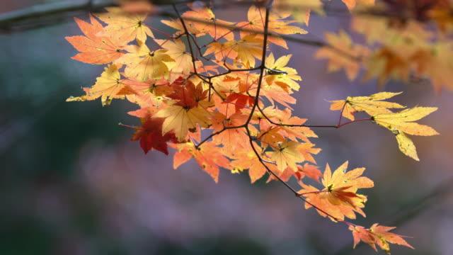 秋赤まま小原公園トヨタ名古屋日本、apple prores 422 (hq) 3840 x 2160 形式 - トヨタ点の映像素材/bロール