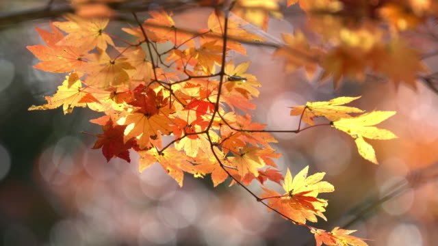4 k: 小原公園トヨタ名古屋、apple prores 422 (hq) で 3840 x 2160 形式のままに秋赤 - トヨタ点の映像素材/bロール