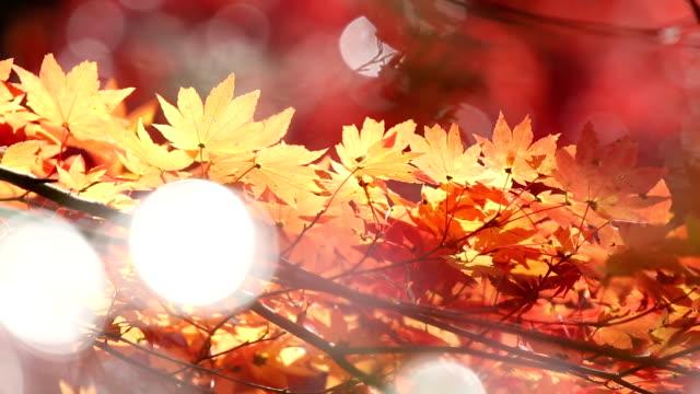 秋の赤のまま小原トヨタ名古屋 - トヨタ点の映像素材/bロール