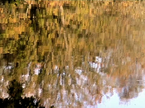 (pal) autumn reflection - 枝 植物部分 個影片檔及 b 捲影像