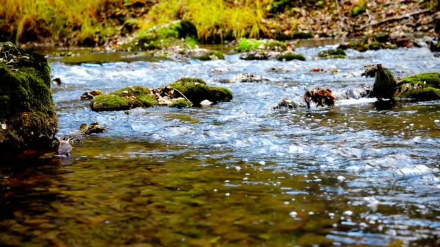 Autumn river. video