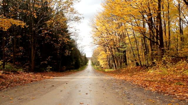 vídeos de stock e filmes b-roll de outono estrada. - reto descrição física