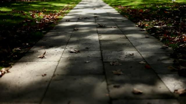 Autumn Road video