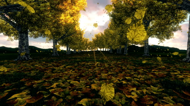Autumn Scene On A Sunny Day video
