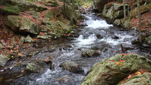 Autumn stream with Audio video