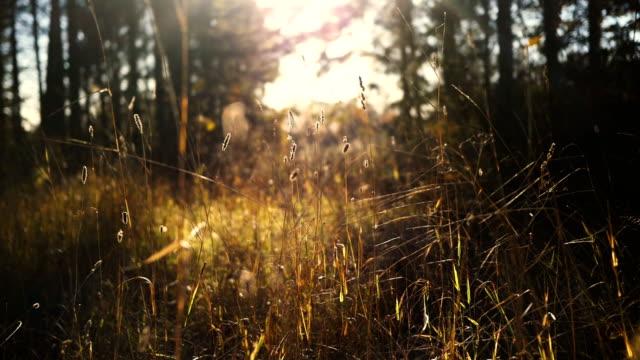 vídeos de stock e filmes b-roll de outono luz solar - países nórdicos