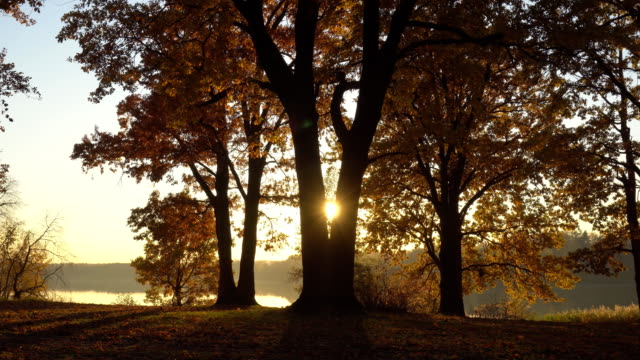 autumn sunset in an oak grove on the lake, dolly shot