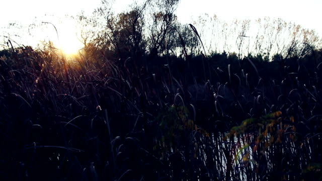 Autumn sunshine on the river, sun goes trough branches video
