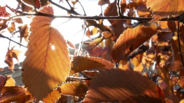 vídeos de stock e filmes b-roll de autumn tree leaves sky background - setembro