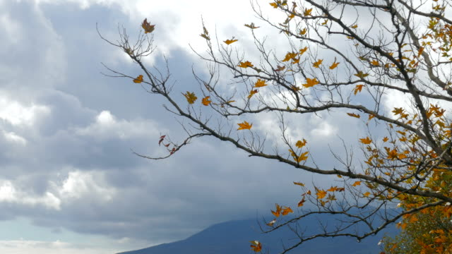 Autumn tree with dry withered leaves video