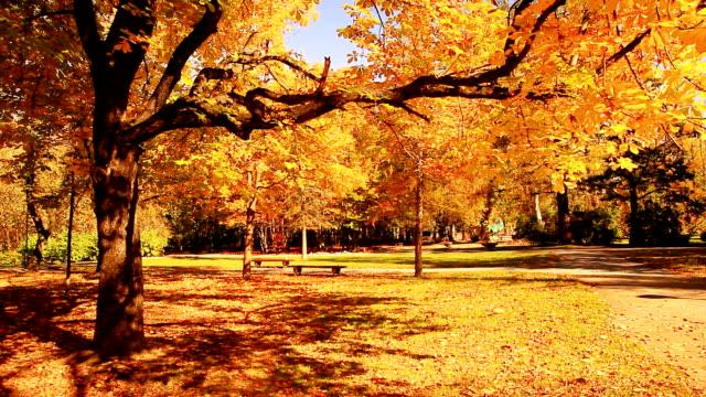 Autumn tree-HQ 1080p video