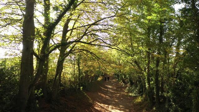 alberi autunnali in inghilterra - sussex occidentale video stock e b–roll