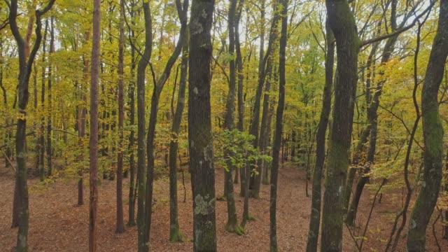 ms autumn ağaçlar uzak ormanda - styria stok videoları ve detay görüntü çekimi