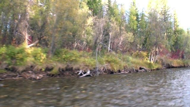 stockvideo's en b-roll-footage met de bomen van de herfst op kust van de rivier van lena in siberië. - duurzaam toerisme