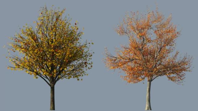 vídeos de stock e filmes b-roll de autumn trees - oscilar
