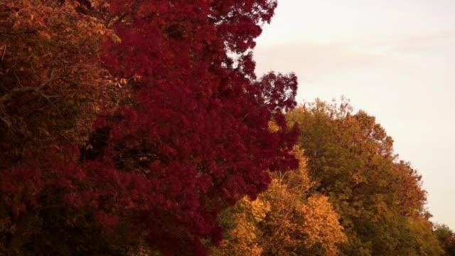 秋樹 - four seasons 個影片檔及 b 捲影像