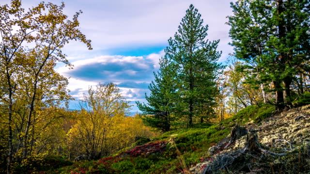 Autumn tundra. Timelapse video