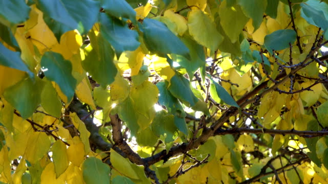 Autumn urban video sketch screen saver Autumn yellow leaves on the branches of a tree close-up urban video sketching clip saver transition saturated color stock videos & royalty-free footage