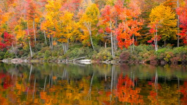 Autumn video