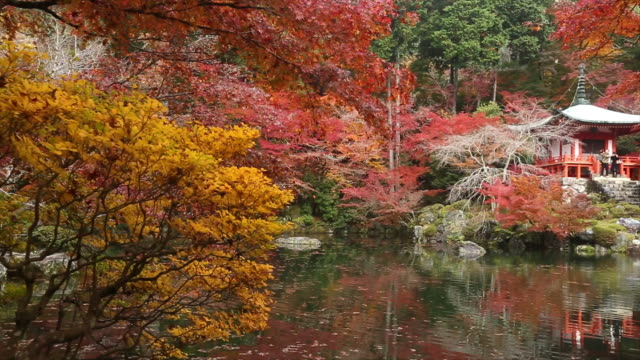 Autumn Maple leaves in japan autumn. maple leaf videos stock videos & royalty-free footage