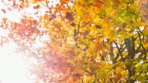 vídeos y material grabado en eventos de stock de otoño - caer