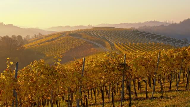 ds hösten vingård vid solnedgången - steiermark bildbanksvideor och videomaterial från bakom kulisserna