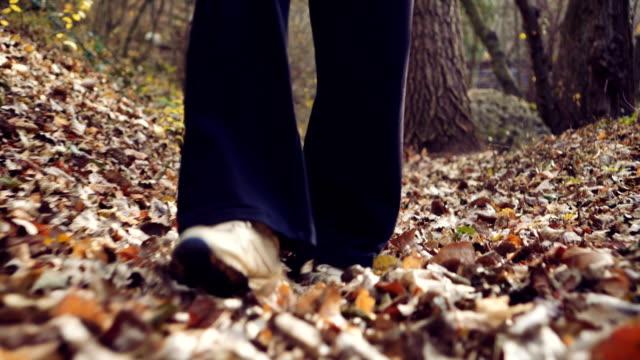 森林裡的秋天漫步 - future 個影片檔及 b 捲影像