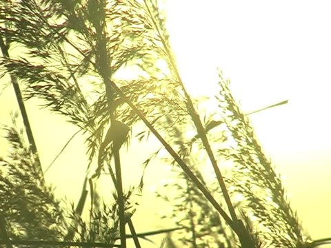 stockvideo's en b-roll-footage met autumn wetlands - natuurgrond