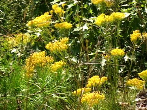 vídeos de stock, filmes e b-roll de outono de flores selvagens - flor temperada
